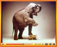 Ever see an elephant stand on a toy and the toy to survive